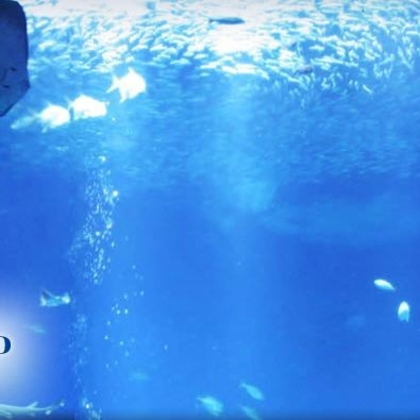 Aqua World Ibaraki Prefectural Oarai Aquarium